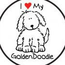 Goldndoodle