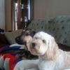 Rockhound6165