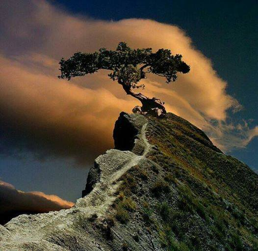 mountain.tree.jpg